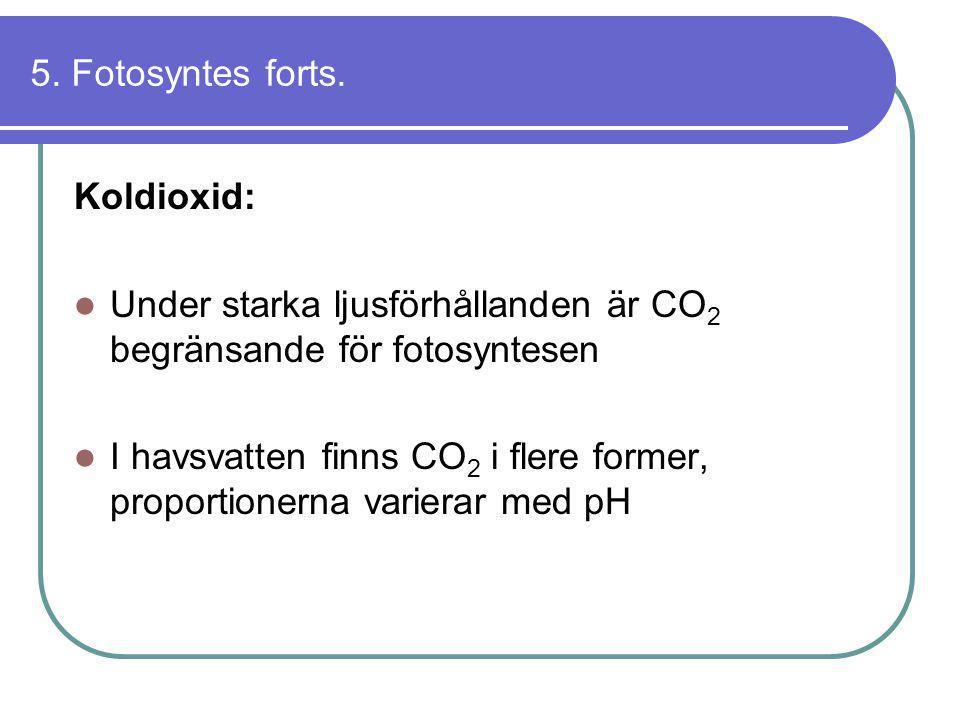 5. Fotosyntes forts. Koldioxid:  Under starka ljusförhållanden är CO 2 begränsande för fotosyntesen  I havsvatten finns CO 2 i flere former, proport