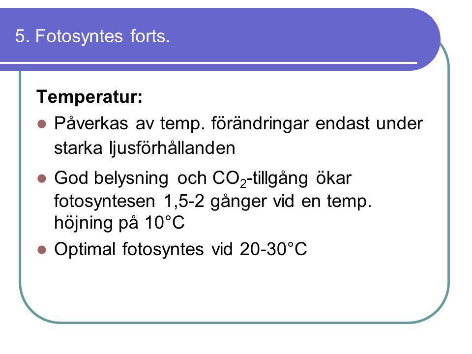 5. Fotosyntes forts. Temperatur:  Påverkas av temp. förändringar endast under starka ljusförhållanden  God belysning och CO 2 -tillgång ökar fotosyn