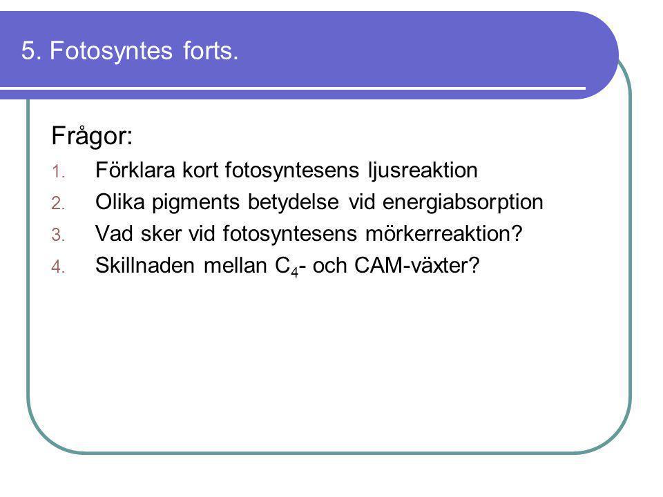 5. Fotosyntes forts. Frågor: 1. Förklara kort fotosyntesens ljusreaktion 2. Olika pigments betydelse vid energiabsorption 3. Vad sker vid fotosyntesen