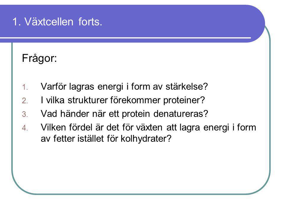 1. Växtcellen forts. Frågor: 1. Varför lagras energi i form av stärkelse? 2. I vilka strukturer förekommer proteiner? 3. Vad händer när ett protein de