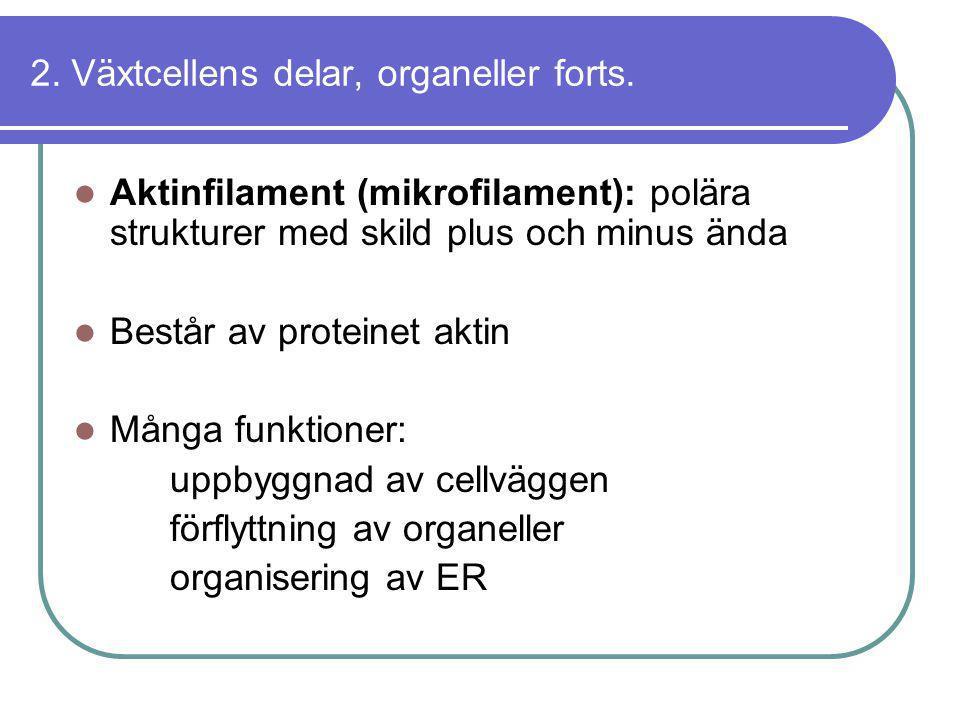 2. Växtcellens delar, organeller forts.  Aktinfilament (mikrofilament): polära strukturer med skild plus och minus ända  Består av proteinet aktin 