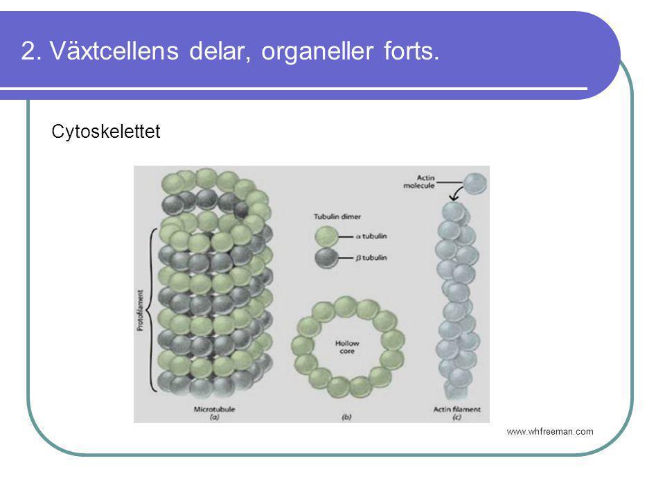 2. Växtcellens delar, organeller forts. Cytoskelettet www.whfreeman.com
