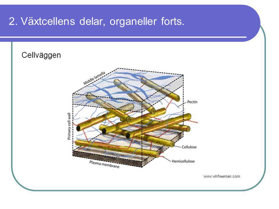 2. Växtcellens delar, organeller forts. Cellväggen www.whfreeman.com