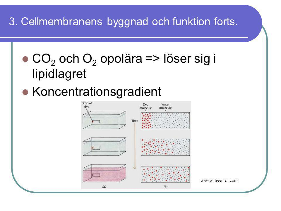 3. Cellmembranens byggnad och funktion forts.  CO 2 och O 2 opolära => löser sig i lipidlagret  Koncentrationsgradient www.whfreeman.com