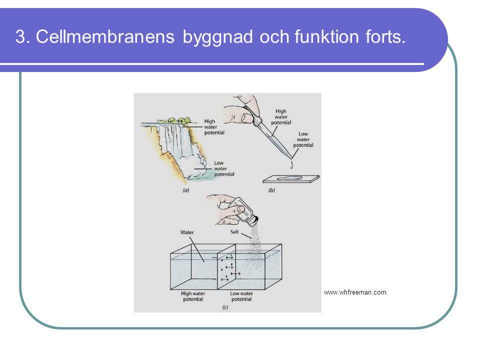 3. Cellmembranens byggnad och funktion forts. www.whfreeman.com