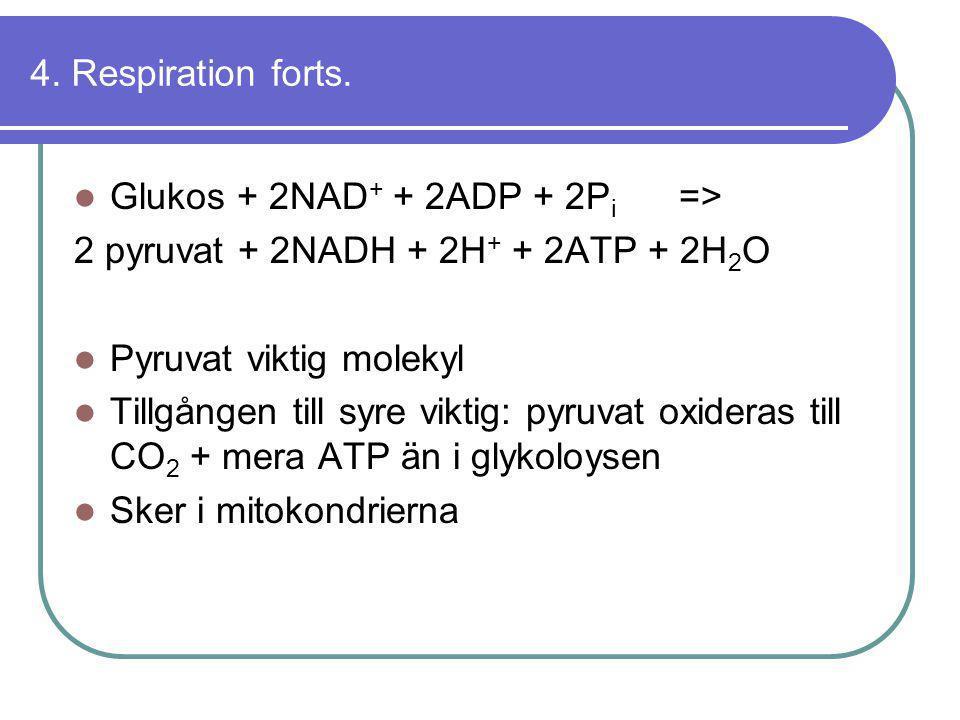 4. Respiration forts.  Glukos + 2NAD + + 2ADP + 2P i => 2 pyruvat + 2NADH + 2H + + 2ATP + 2H 2 O  Pyruvat viktig molekyl  Tillgången till syre vikt