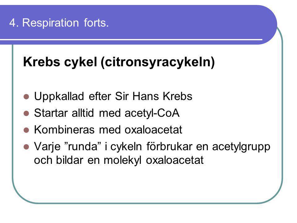 4. Respiration forts. Krebs cykel (citronsyracykeln)  Uppkallad efter Sir Hans Krebs  Startar alltid med acetyl-CoA  Kombineras med oxaloacetat  V