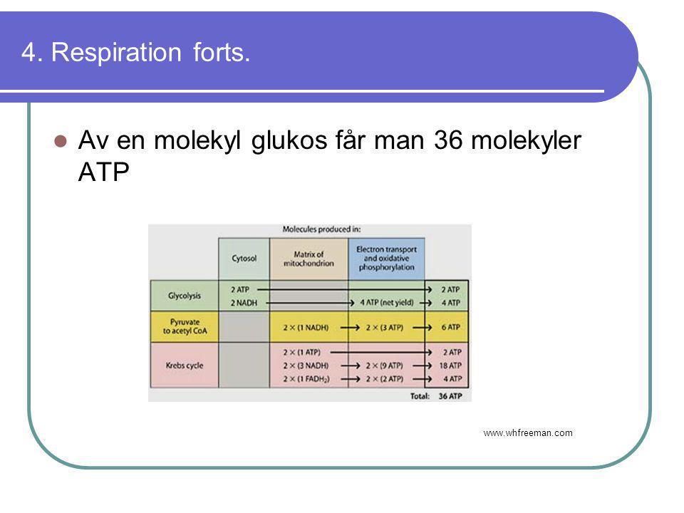 4. Respiration forts.  Av en molekyl glukos får man 36 molekyler ATP www.whfreeman.com