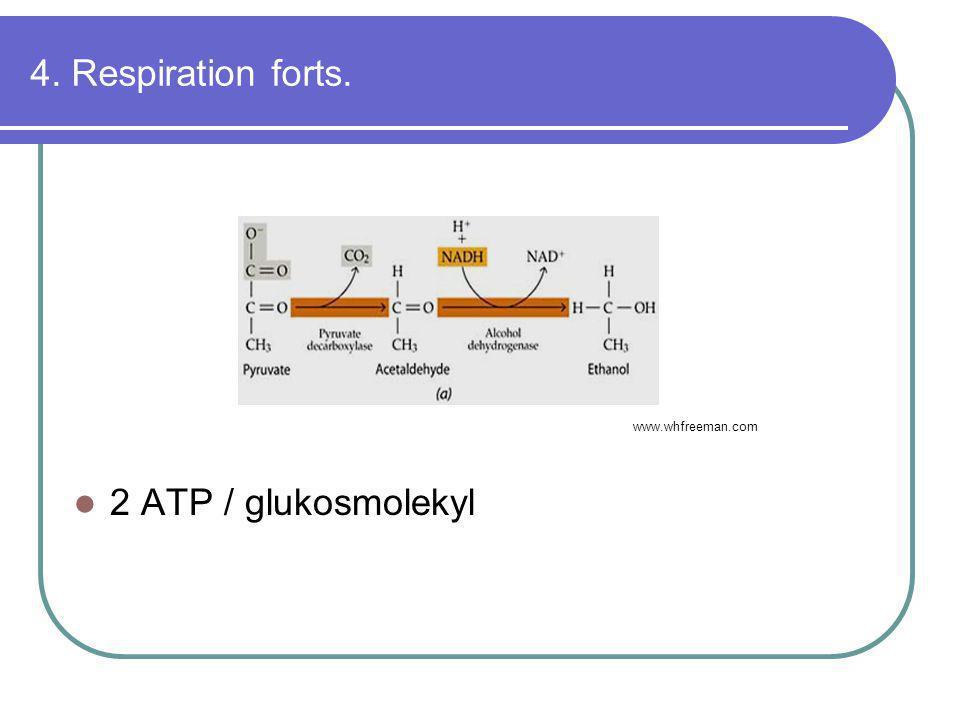 4. Respiration forts.  2 ATP / glukosmolekyl www.whfreeman.com