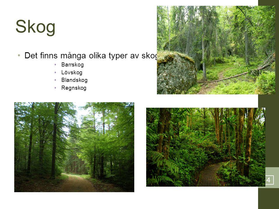 4 Skog •Det finns många olika typer av skog: •Barrskog •Lövskog •Blandskog •Regnskog