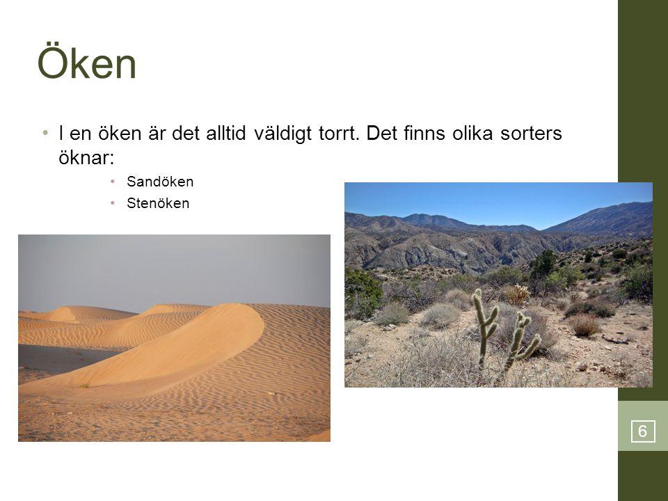6 Öken •I en öken är det alltid väldigt torrt. Det finns olika sorters öknar: •Sandöken •Stenöken