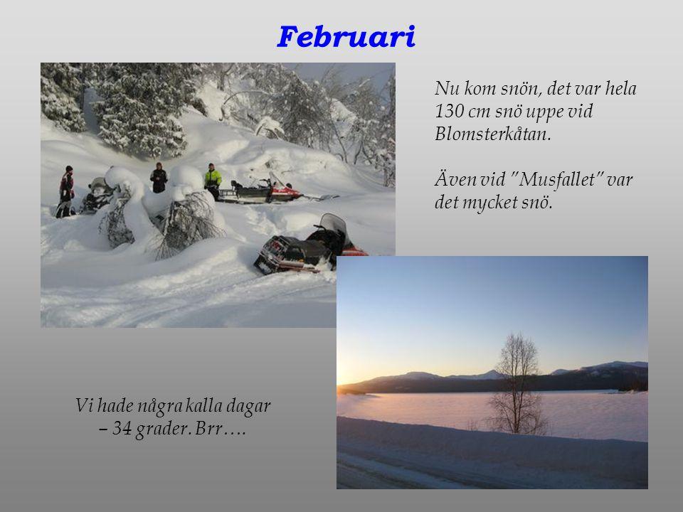 Februari Nu kom snön, det var hela 130 cm snö uppe vid Blomsterkåtan.