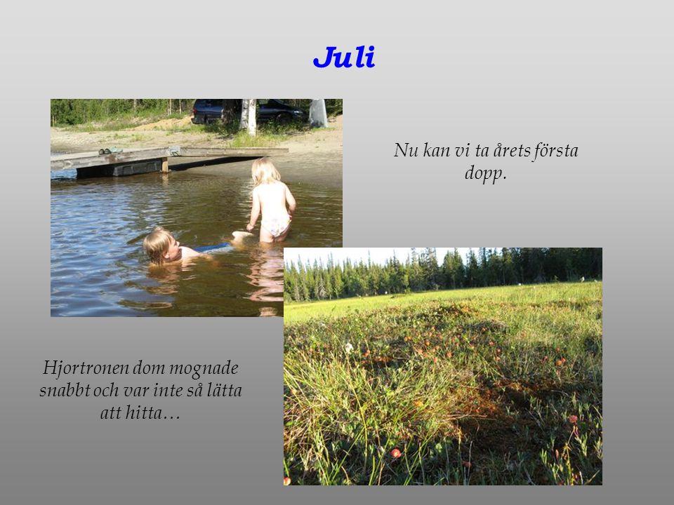 Juli Nu kan vi ta årets första dopp. Hjortronen dom mognade snabbt och var inte så lätta att hitta…