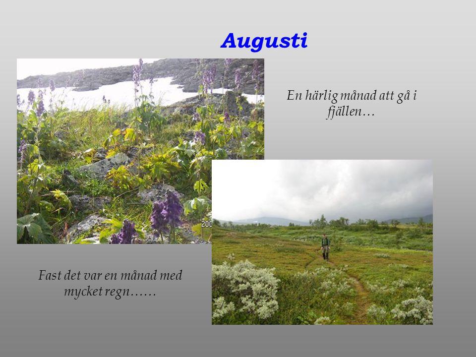 Augusti En härlig månad att gå i fjällen… Fast det var en månad med mycket regn……