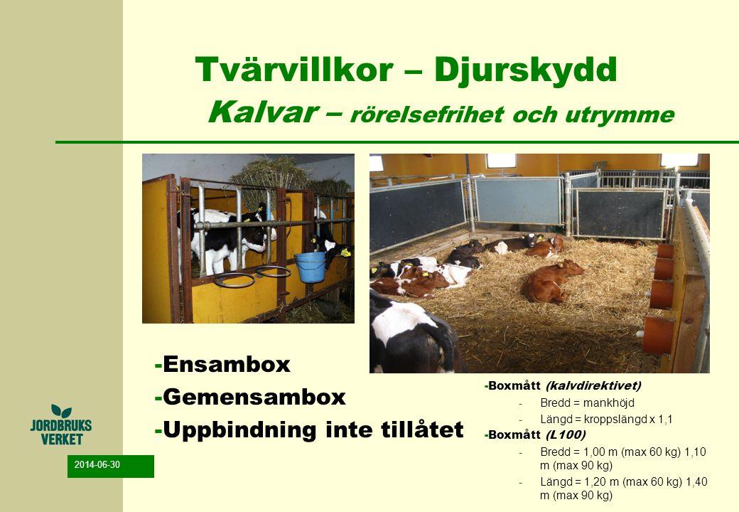 2014-06-30 Tvärvillkor – Djurskydd Kalvar – rörelsefrihet och utrymme -Ensambox -Gemensambox -Uppbindning inte tillåtet -Boxmått (kalvdirektivet) -Bre