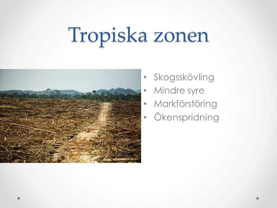 Tropiska zonen • Skogsskövling • Mindre syre • Markförstöring • Ökenspridning