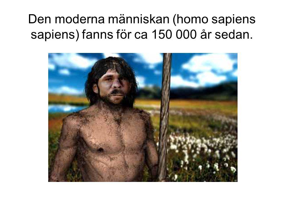 Den moderna människan (homo sapiens sapiens) fanns för ca 150 000 år sedan.