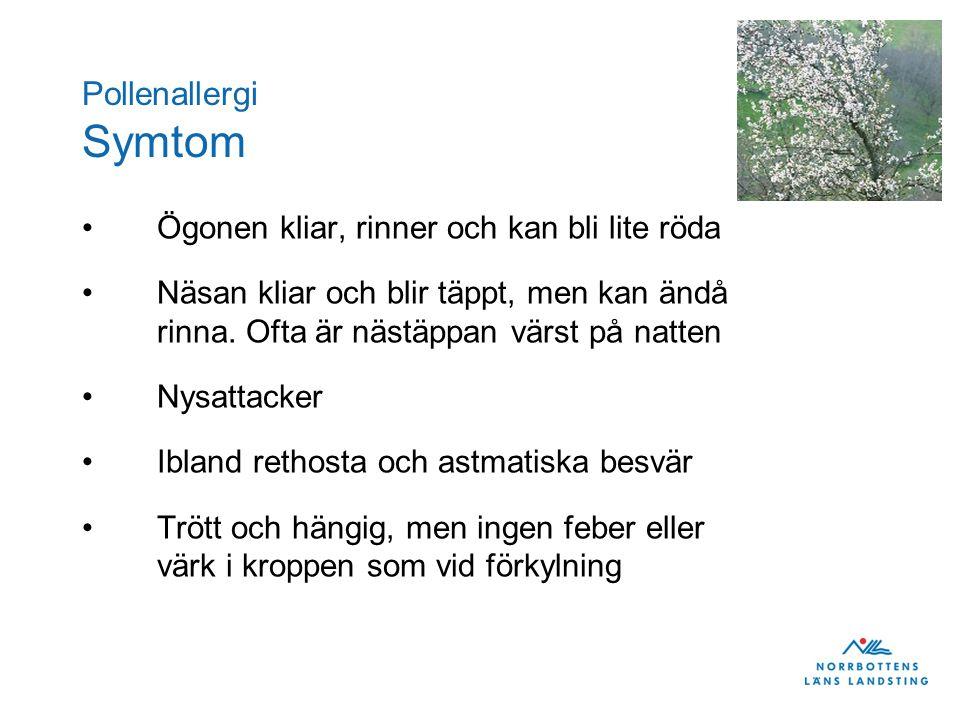 Pollenallergi Symtom •Ögonen kliar, rinner och kan bli lite röda •Näsan kliar och blir täppt, men kan ändå rinna.