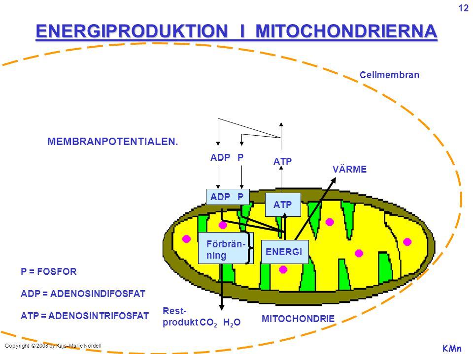 ADP P ATP VÄRME ENERGI Förbrän- ning MITOCHONDRIE Rest- produkt CO 2 H 2 O P = FOSFOR ADP = ADENOSINDIFOSFAT ATP = ADENOSINTRIFOSFAT Cellmembran ENERGIPRODUKTION I MITOCHONDRIERNA KMn MEMBRANPOTENTIALEN.