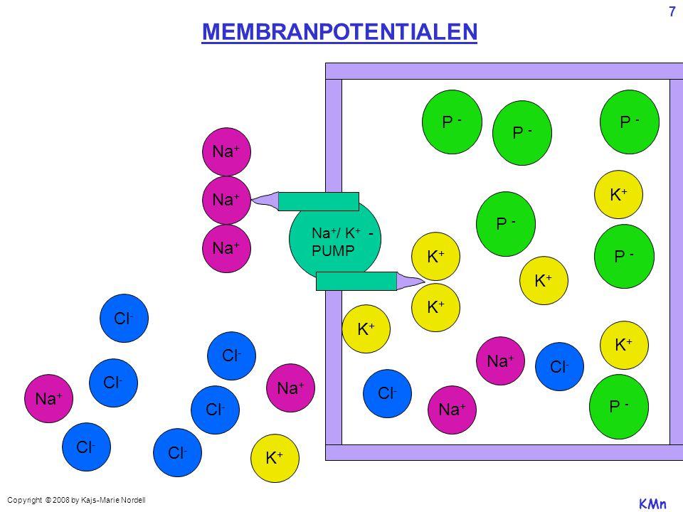 MEMBRANPOTENTIALEN Na + / K + - PUMP K+K+ P - Cl - K+K+ Na + P - K+K+ K+K+ K+K+ Na + Cl - K+K+ K+K+ Na + KMn Copyright © 2008 by Kajs-Marie Nordell 7