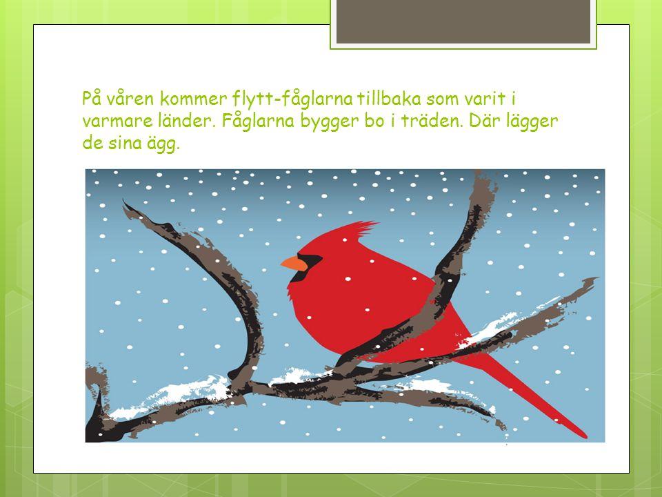 På våren kommer flytt-fåglarna tillbaka som varit i varmare länder. Fåglarna bygger bo i träden. Där lägger de sina ägg.