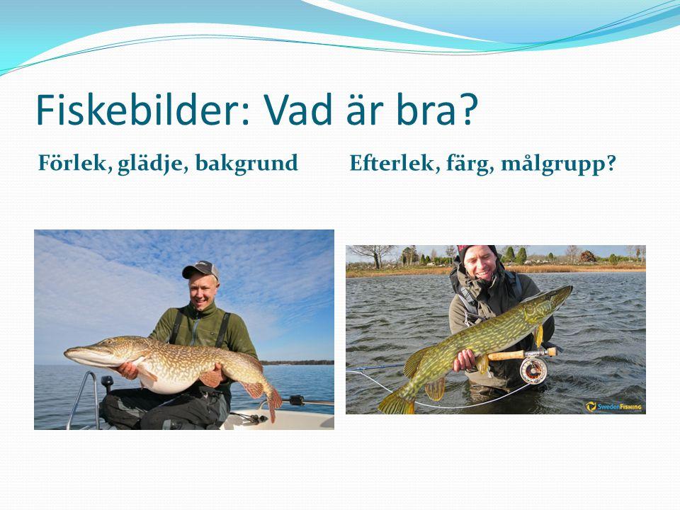Fiskebilder: Vad är bra Förlek, glädje, bakgrund Efterlek, färg, målgrupp