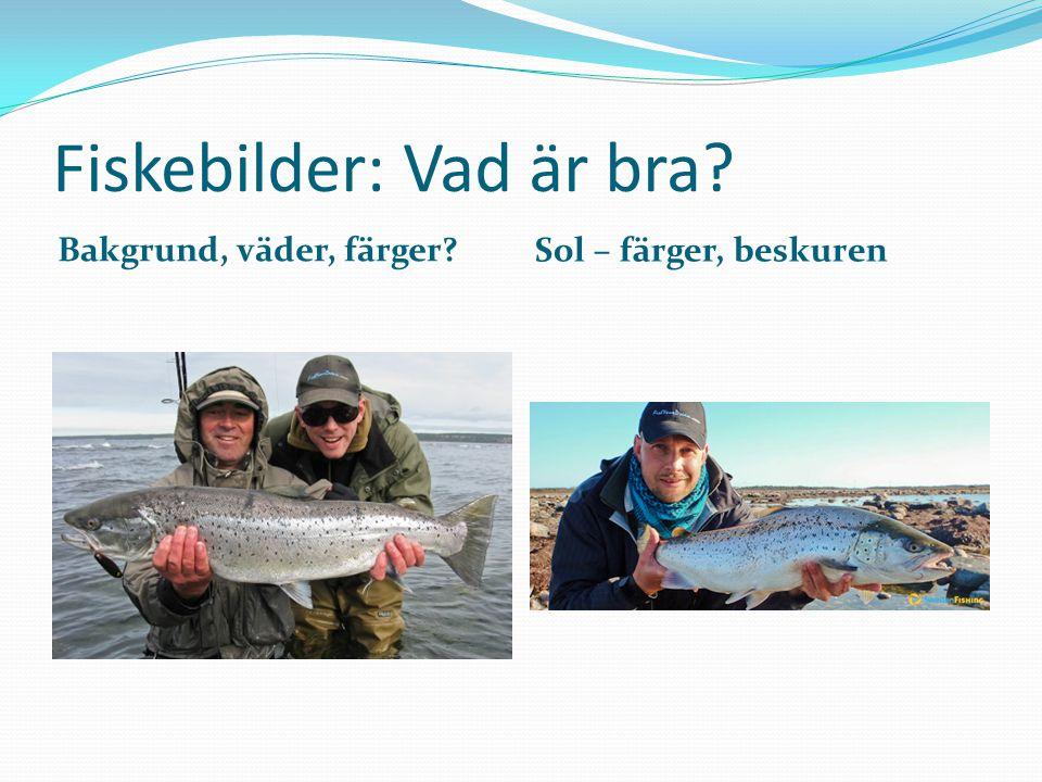 Fiskebilder: Vad är bra? Bakgrund, väder, färger? Sol – färger, beskuren