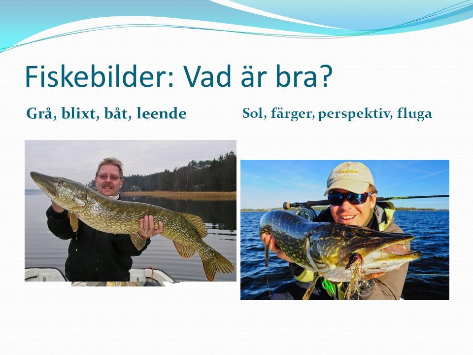 Fiskebilder: Vad är bra Grå, blixt, båt, leende Sol, färger, perspektiv, fluga