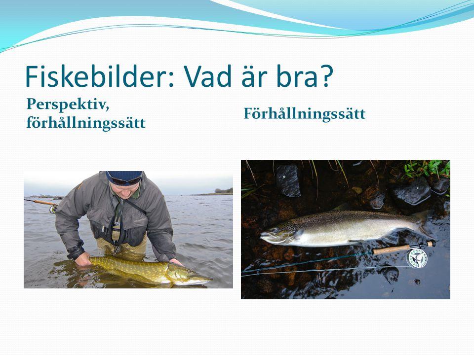 Fiskebilder: Vad är bra Perspektiv, förhållningssätt Förhållningssätt