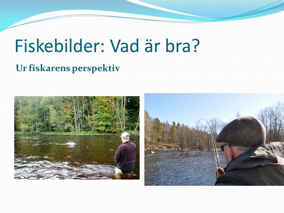 Fiskebilder: Vad är bra? Ur fiskarens perspektiv