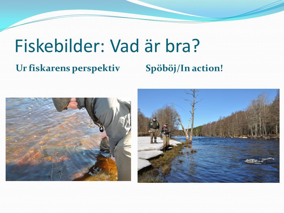 Fiskebilder: Vad är bra? Ur fiskarens perspektiv Spöböj/In action!
