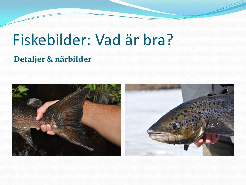 Fiskebilder: Vad är bra? Detaljer & närbilder