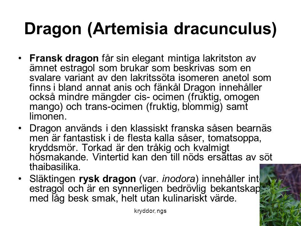 kryddor, ngs25 Dragon (Artemisia dracunculus) •Fransk dragon får sin elegant mintiga lakritston av ämnet estragol som brukar som beskrivas som en sval