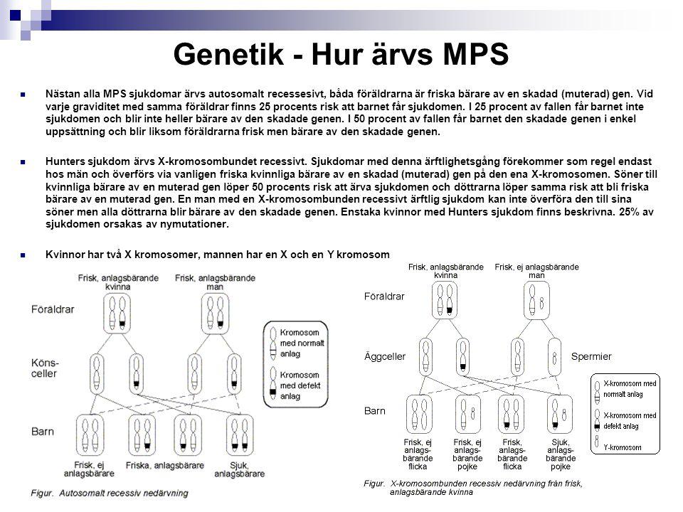 MPS sjukdomarna Sjukdom Uppkallad efter Antal i Sverige MPS I, Hurler, Hurler Scheie, Scheie 7 MPS II, Hunter 6 MPS III, Sanfilippo 12 MPS IV, Morquio5 MPS VI,Marateaux Lamy 2 MPS VII, Sly 0 32 stycken MPS barn i Sverige nu diagnostiserade Av alla nyfödda har man diagnostiserat 1/8700 med lysosomal inlagringssjukdom men det kan vara 1/5000 Samma enzymdefekt kan ge en varierande klinisk bild, där den svåraste formen är Hurler och den mildaste formen är Scheies.