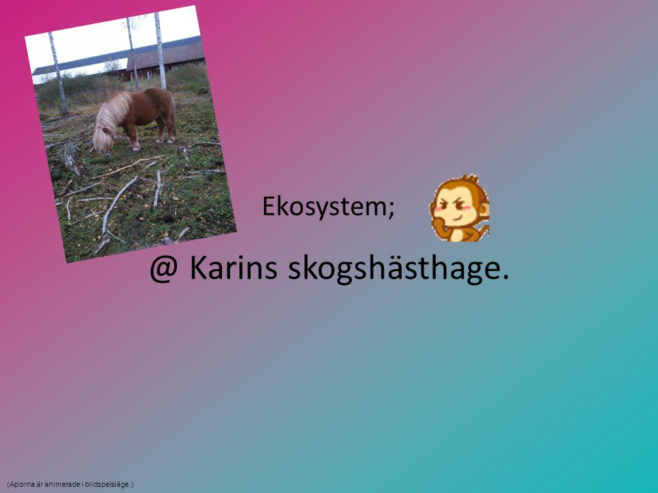 Ekosystem; @ Karins skogshästhage. (Aporna är animerade i bildspelsläge.)