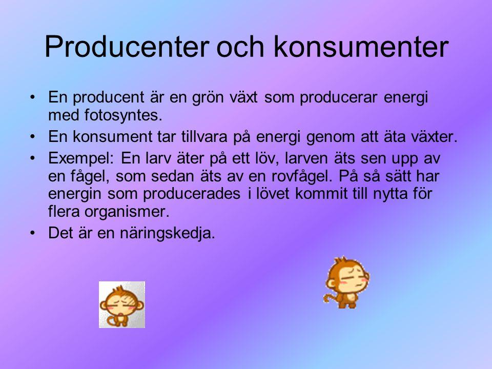 Producenter och konsumenter En producent är en grön växt som producerar energi med fotosyntes. En konsument tar tillvara på energi genom att äta växte