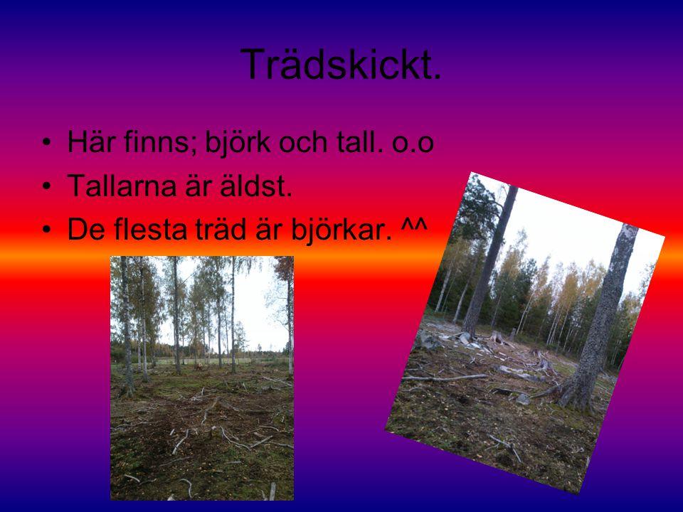 Trädskickt. Här finns; björk och tall. o.o Tallarna är äldst. De flesta träd är björkar. ^^