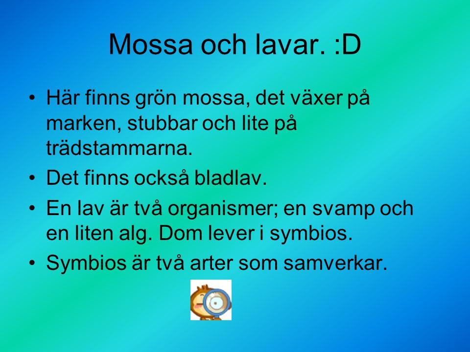 Mossa och lavar. :D Här finns grön mossa, det växer på marken, stubbar och lite på trädstammarna. Det finns också bladlav. En lav är två organismer; e