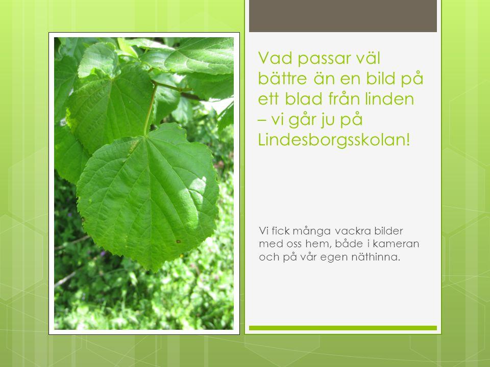 Vad passar väl bättre än en bild på ett blad från linden – vi går ju på Lindesborgsskolan! Vi fick många vackra bilder med oss hem, både i kameran och