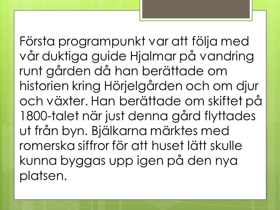 Första programpunkt var att följa med vår duktiga guide Hjalmar på vandring runt gården då han berättade om historien kring Hörjelgården och om djur o