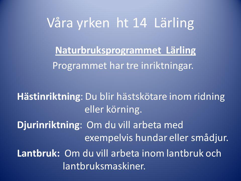 Våra yrken ht 14 Lärling Naturbruksprogrammet Lärling Programmet har tre inriktningar. Hästinriktning: Du blir hästskötare inom ridning eller körning.