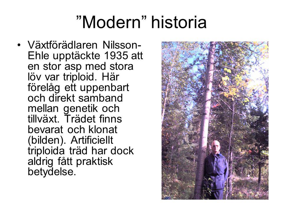 """""""Modern"""" historia Växtförädlaren Nilsson- Ehle upptäckte 1935 att en stor asp med stora löv var triploid. Här förelåg ett uppenbart och direkt samband"""