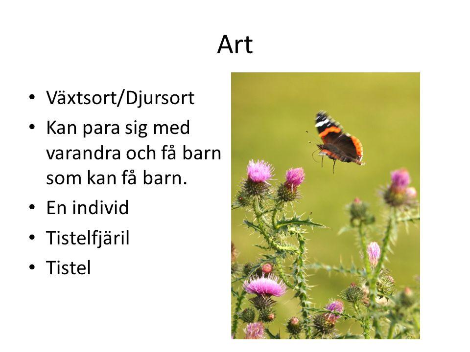 Art Växtsort/Djursort Kan para sig med varandra och få barn som kan få barn. En individ Tistelfjäril Tistel
