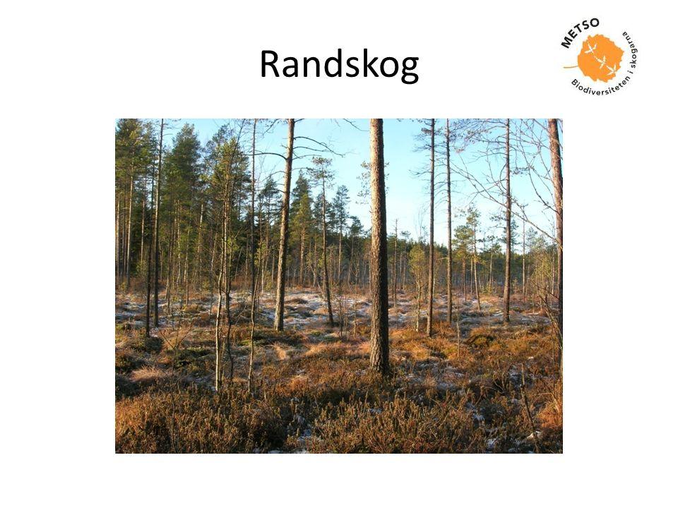 Randskog