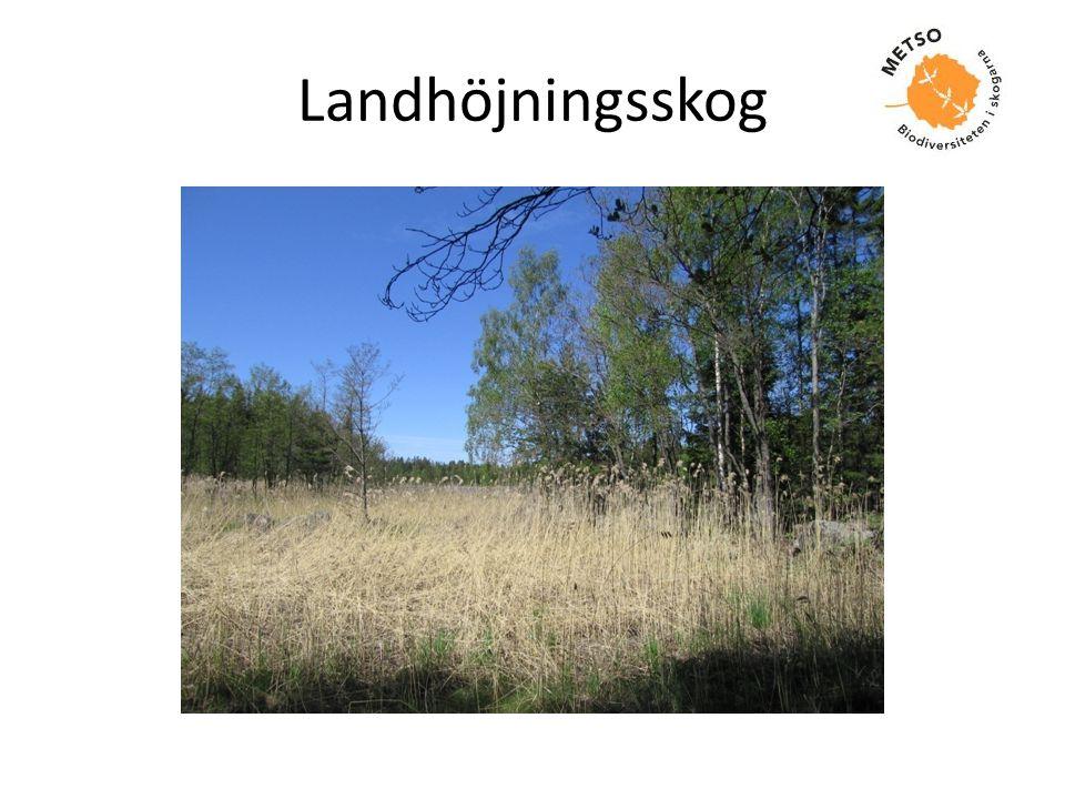 Landhöjningsskog