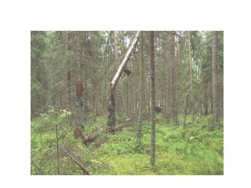 Lövsumpskogar och svämskogar Skogar vid å- och älvstränder som är utsatta för regelbundna översvämningar Lövsumpskogar och svämskogar vid sjöstränder Aldominerade lövsumpskogar vid havsstränder