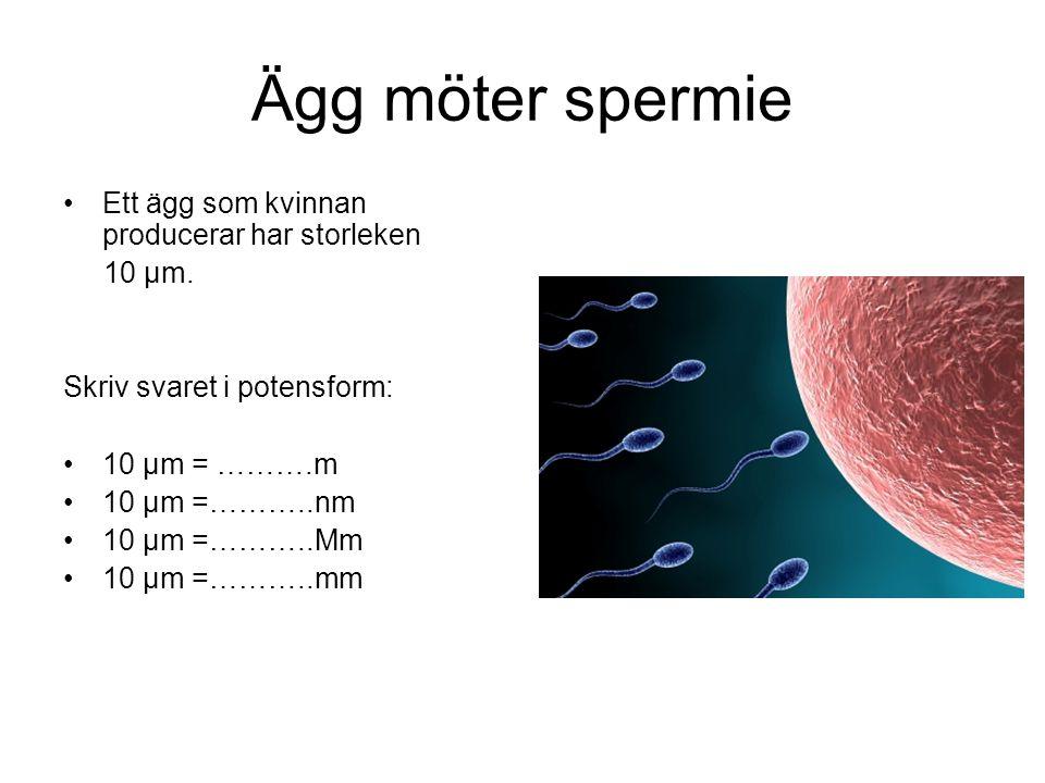 Ägg möter spermie •Ett ägg som kvinnan producerar har storleken 10 μm. Skriv svaret i potensform: •10 μm = ……….m •10 μm =………..nm •10 μm =………..Mm •10 μ