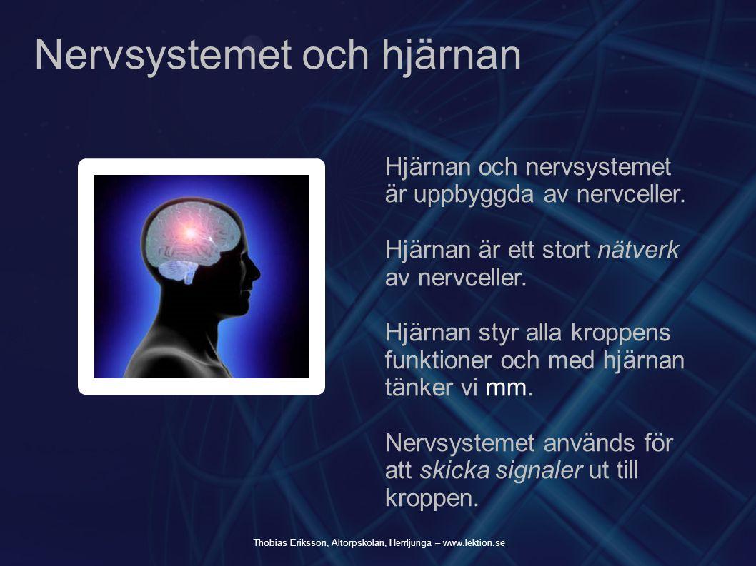 Nervsystemet och hjärnan Hjärnan och nervsystemet är uppbyggda av nervceller. Hjärnan är ett stort nätverk av nervceller. Hjärnan styr alla kroppens f