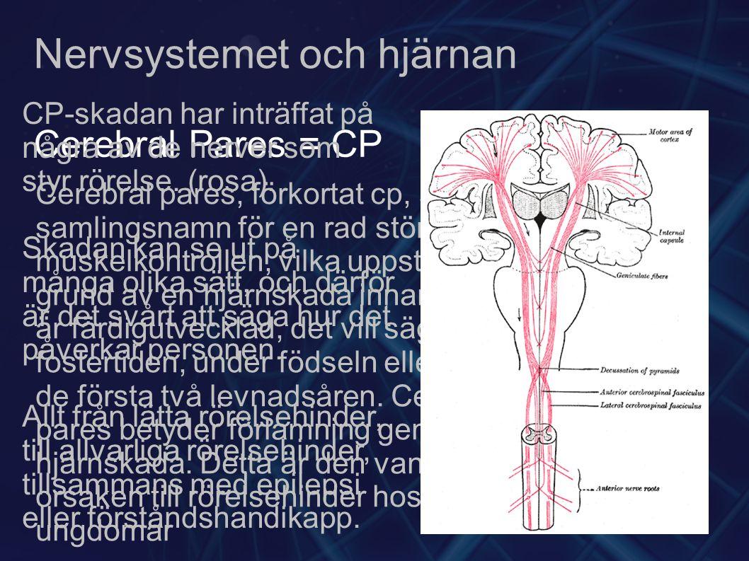Nervsystemet och hjärnan Cerebral Pares = CP Cerebral pares, förkortat cp, är ett samlingsnamn för en rad störningar av muskelkontrollen, vilka uppstått på grund av en hjärnskada innan hjärnan är färdigutvecklad, det vill säga under fostertiden, under födseln eller under de första två levnadsåren.
