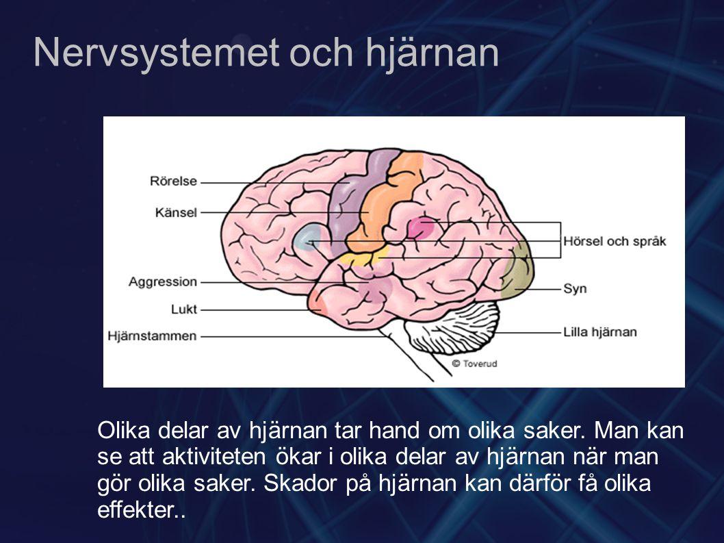 Nervsystemet och hjärnan Olika delar av hjärnan tar hand om olika saker. Man kan se att aktiviteten ökar i olika delar av hjärnan när man gör olika sa